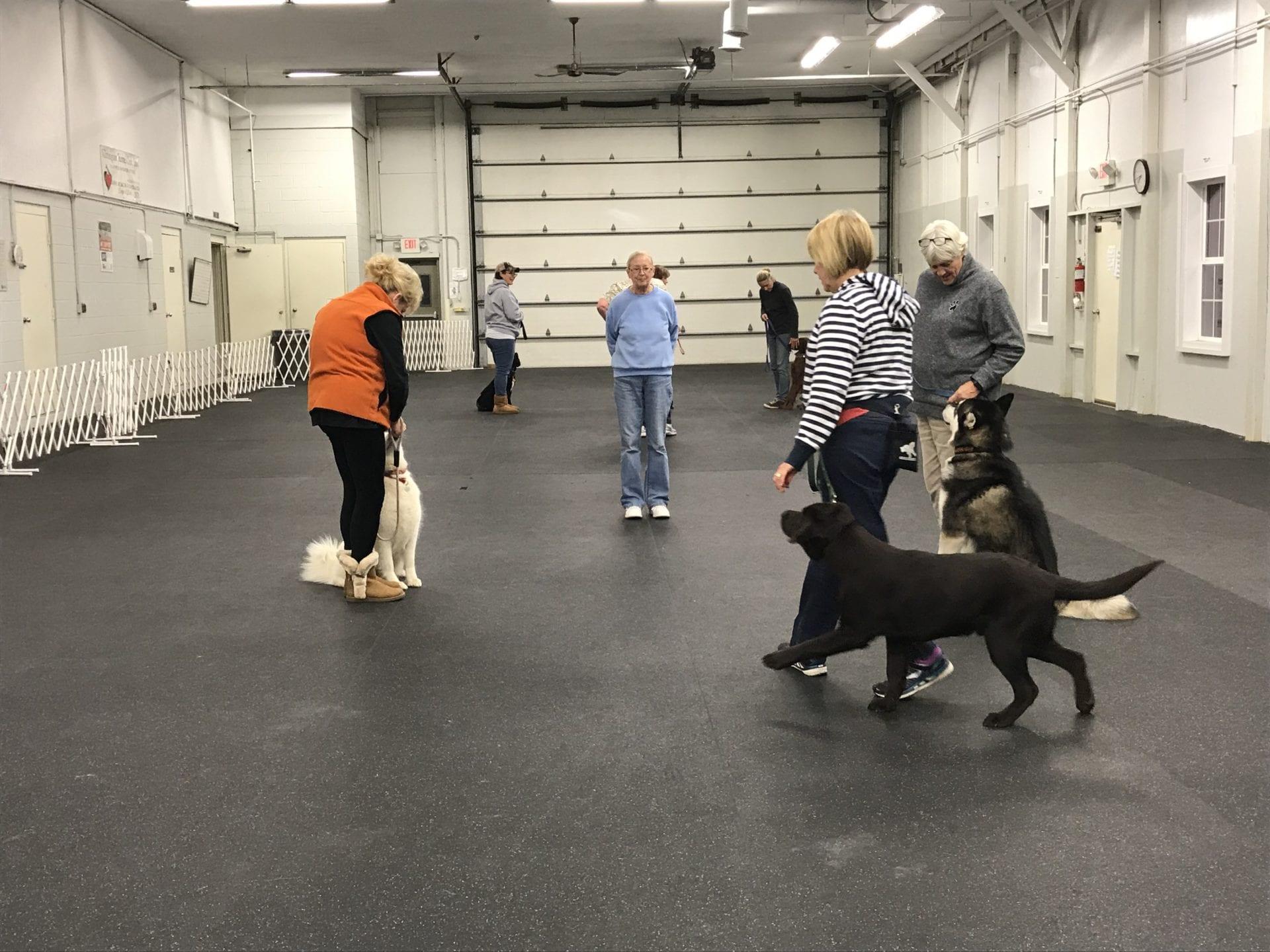 Dog Training Club, Newark, DE