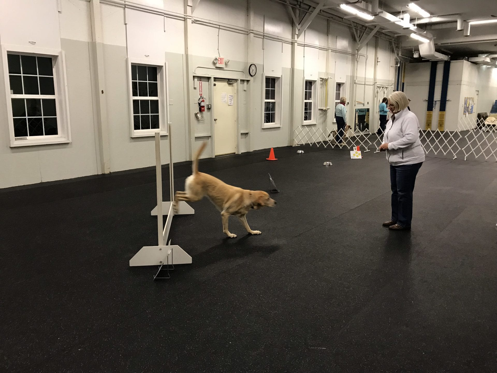 Dog Training Club, Newark, DE